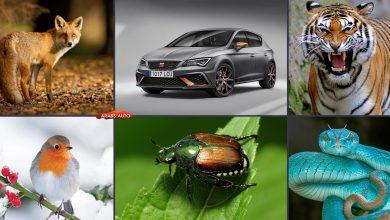 صورة سيارات بأسماء الحيوانات (مع الصور)